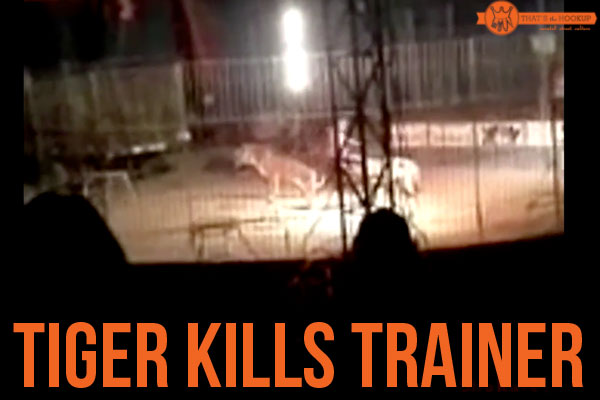 Tiger Kills Trainer in Mexican Circus – Video